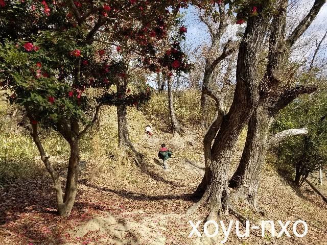 f:id:xoyu-nxo:20210215144053j:image
