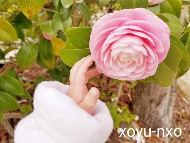 f:id:xoyu-nxo:20210326095250j:image