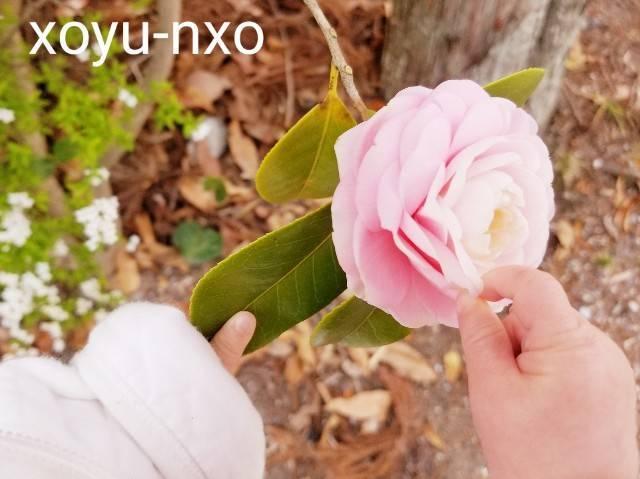 f:id:xoyu-nxo:20210326095411j:image