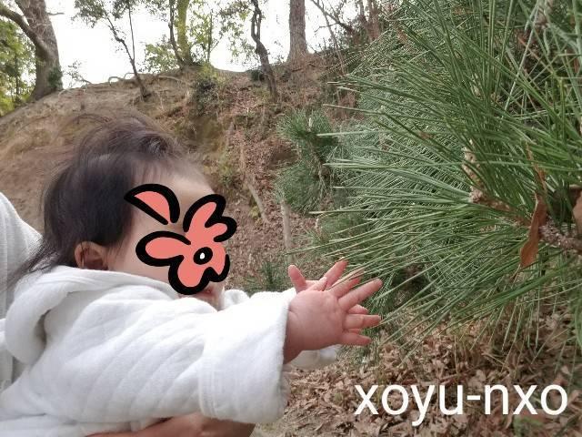 f:id:xoyu-nxo:20210326104611j:image
