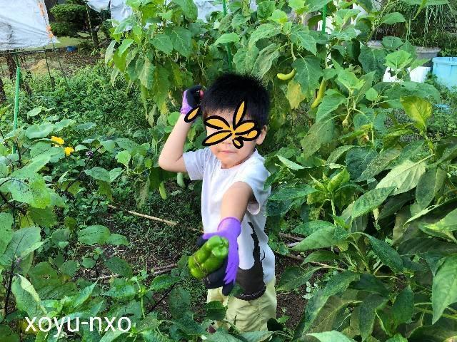 f:id:xoyu-nxo:20211001214546j:image