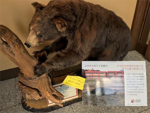 知床五湖、クマの剥製です。本物が出てきたら怖いな・・