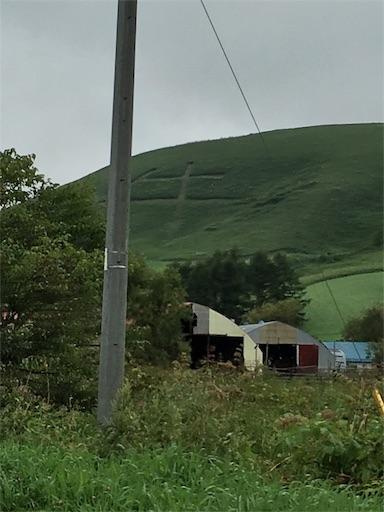 ポンポコ山(モアン山)の「牛」です