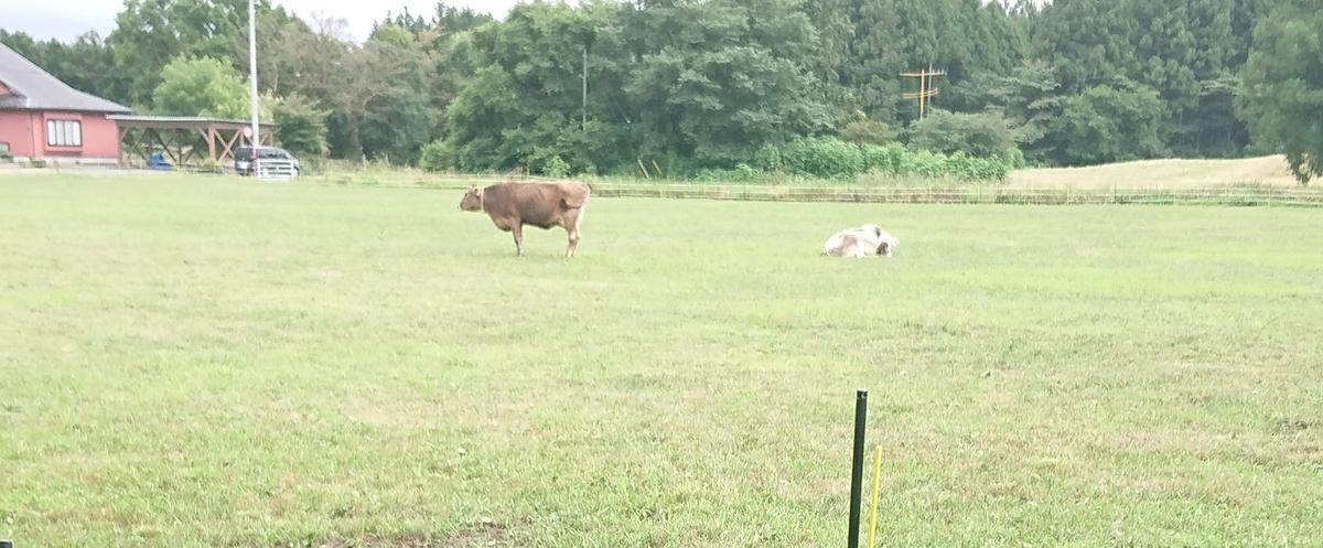 20190816223341 - 富士山高原 cow resort IDEBOKU(カウリゾート いでぼく)に行ってきました!