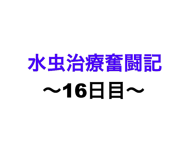 f:id:xxxxkun:20180307105730p:plain