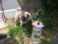 犬のふんの放置防止啓発,ペットの糞放置禁止対策