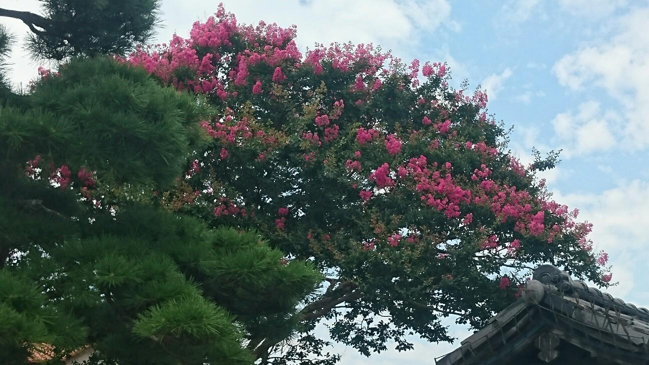 f:id:y-garden:20160809131003j:image
