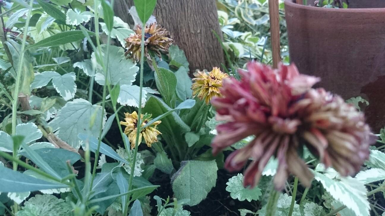 f:id:y-garden:20160809191639j:image