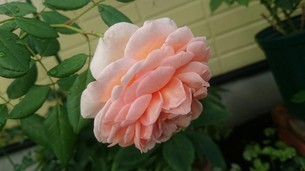 f:id:y-garden:20160819091631j:image