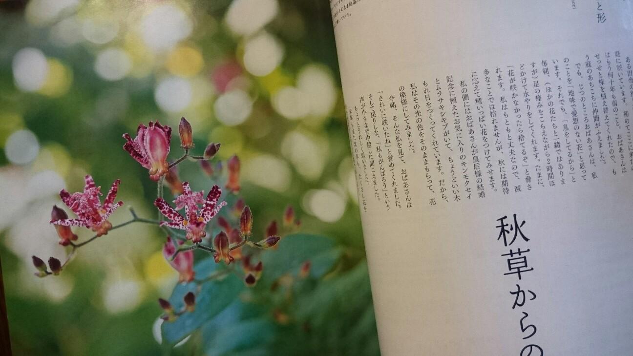 f:id:y-garden:20160819210552j:image