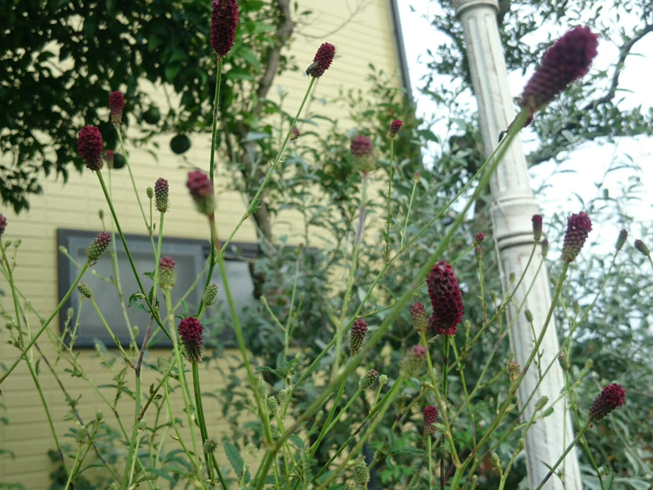 f:id:y-garden:20160917132629j:image
