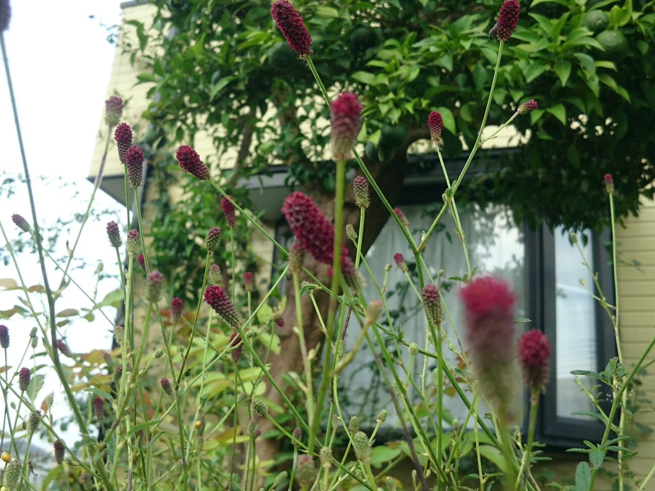 f:id:y-garden:20160917150100j:image