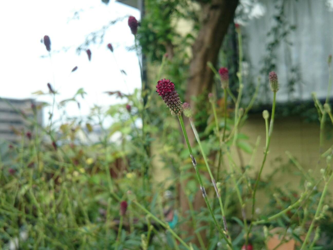 f:id:y-garden:20160917150113j:image