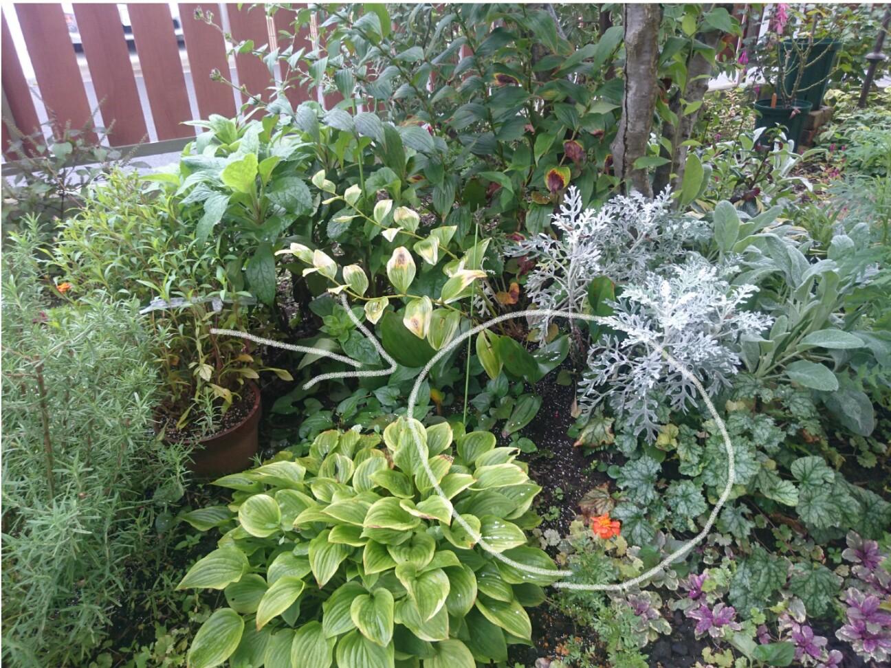 f:id:y-garden:20160928074323j:image