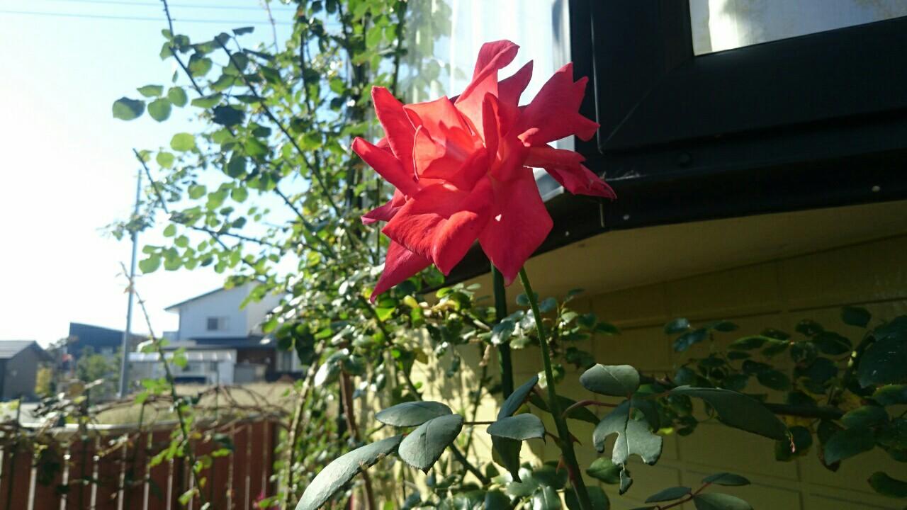f:id:y-garden:20161120234024j:image