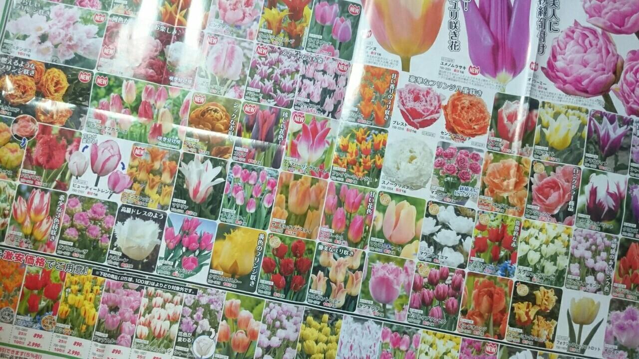 f:id:y-garden:20161121005811j:image