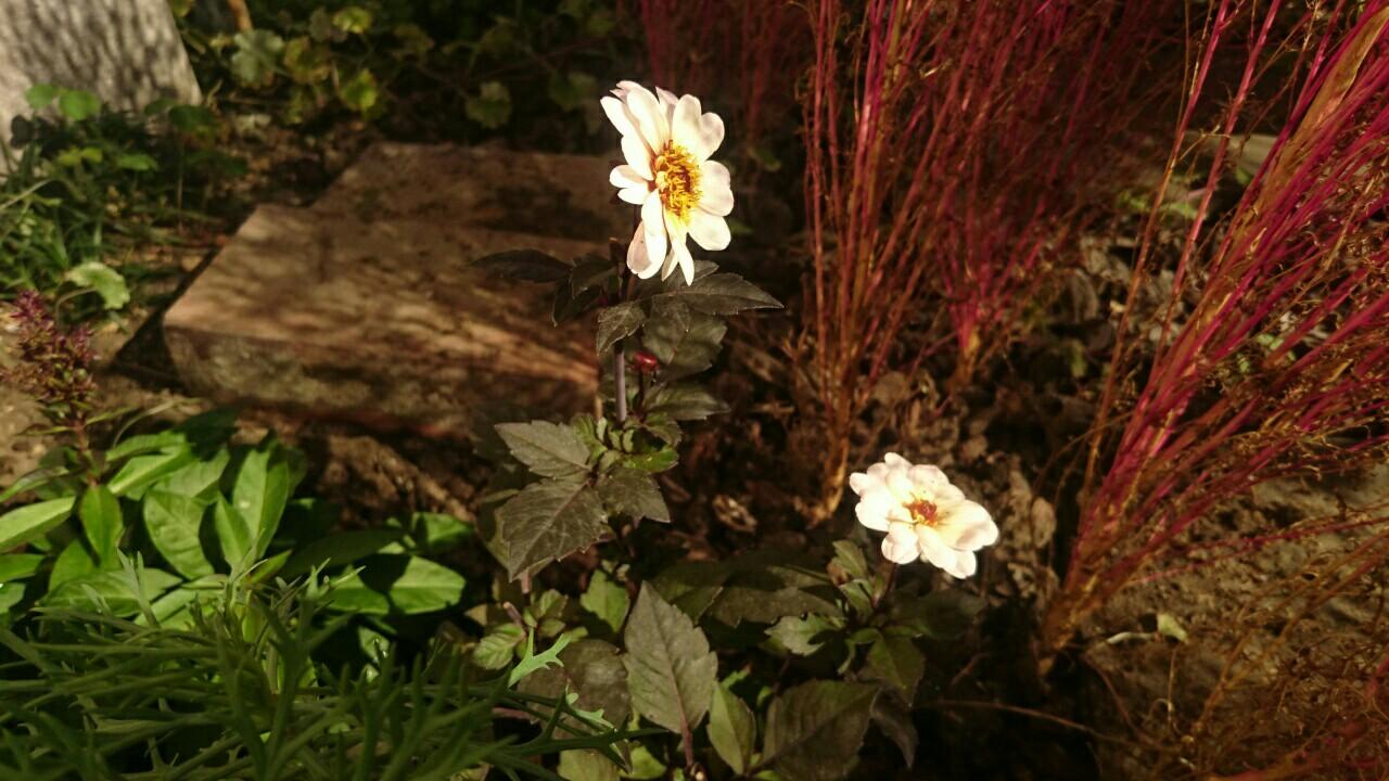 f:id:y-garden:20161121195321j:image
