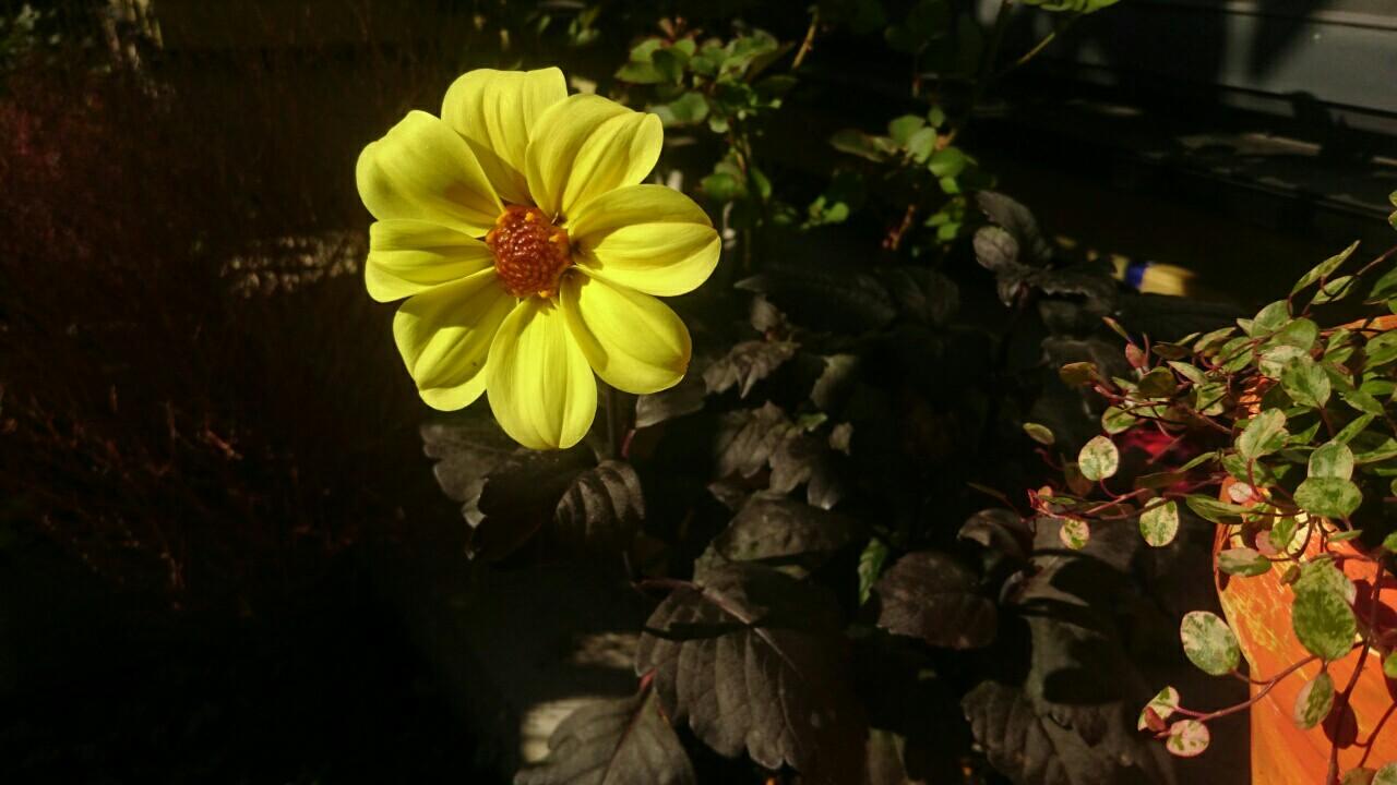 f:id:y-garden:20161121211751j:image