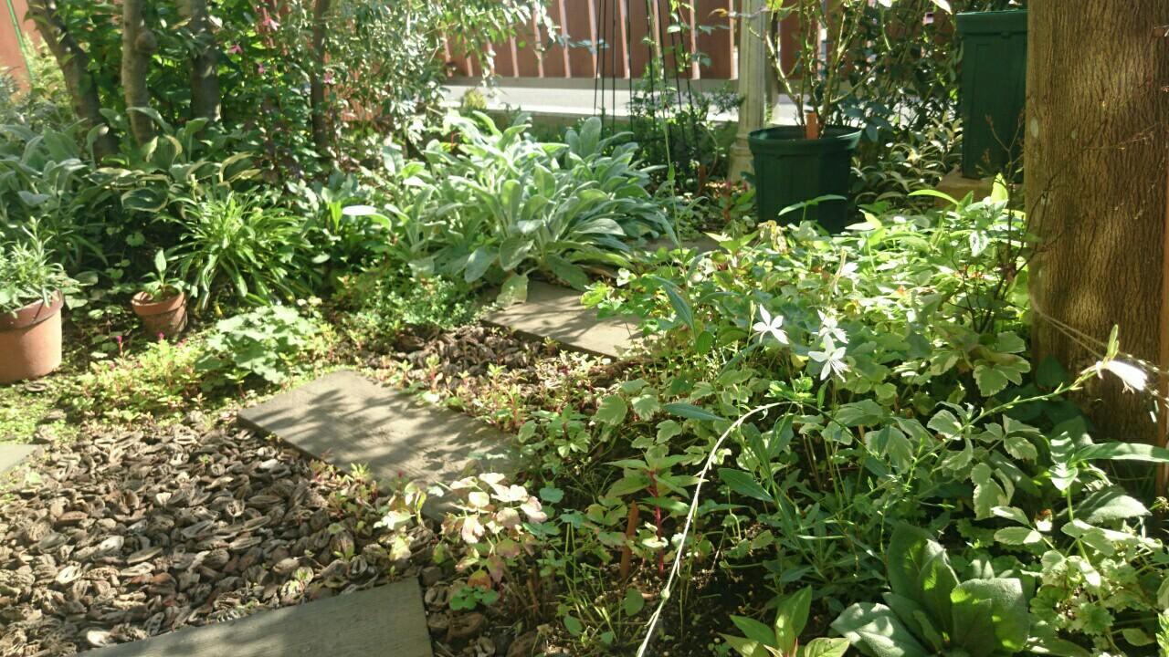 f:id:y-garden:20161125231328j:image