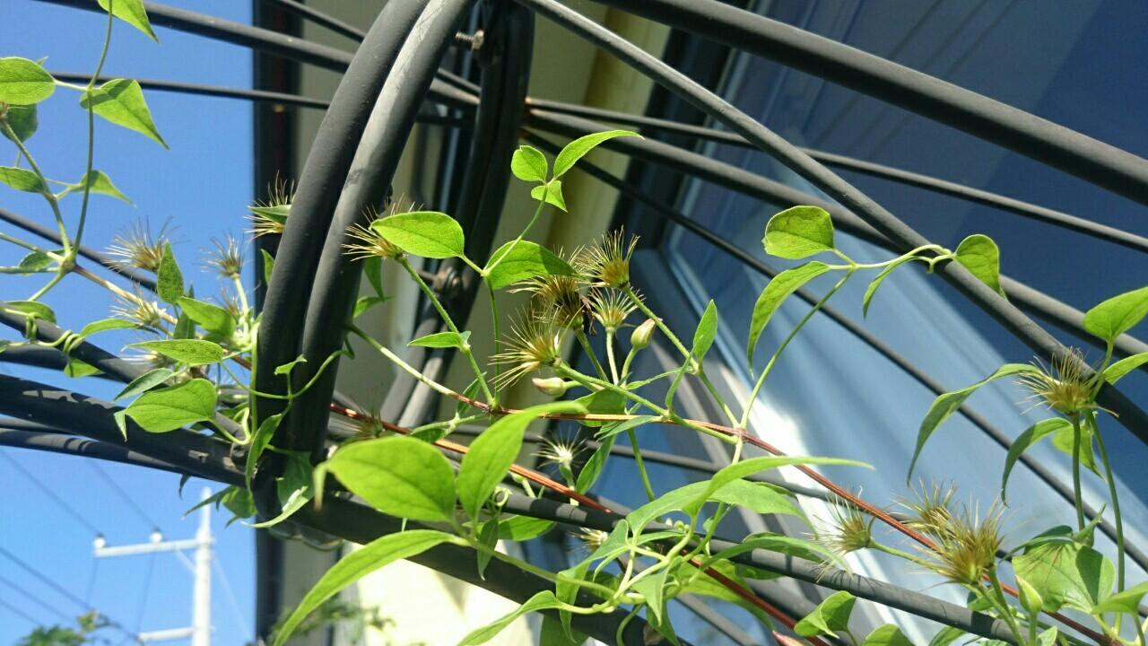 f:id:y-garden:20161127235021j:image