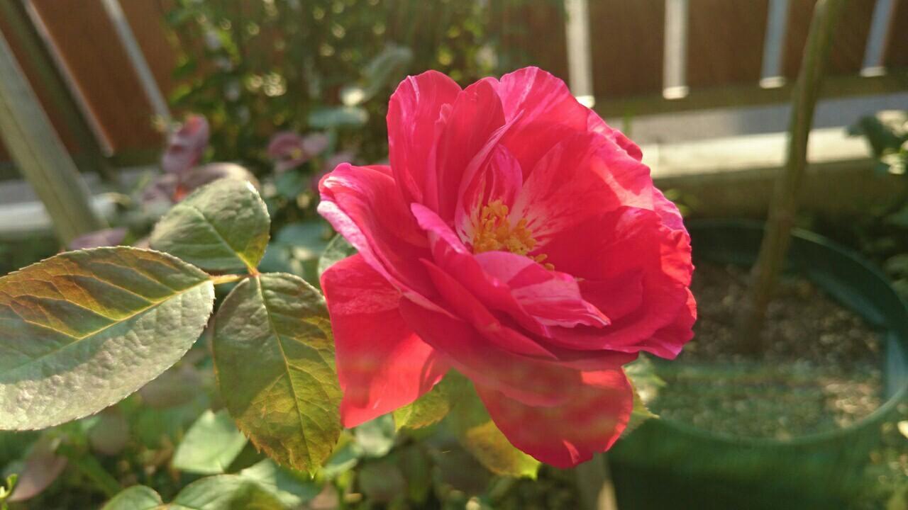 f:id:y-garden:20161127235055j:image