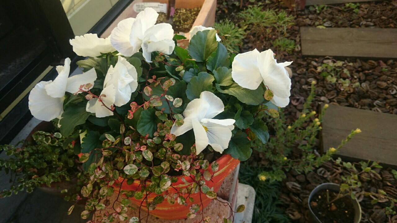 f:id:y-garden:20161210092246j:image