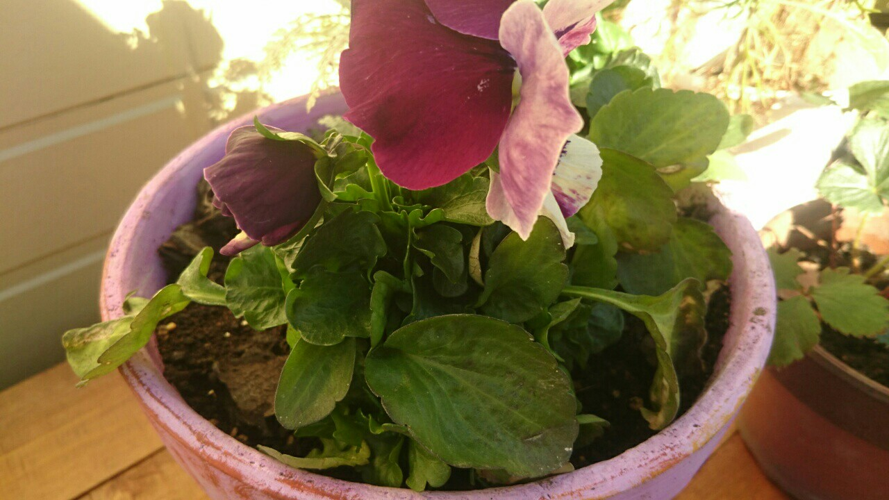 f:id:y-garden:20161210110342j:image
