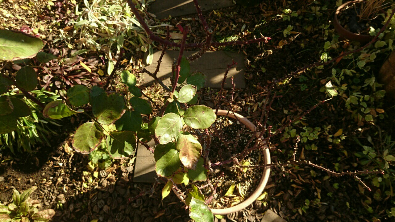 f:id:y-garden:20161217094742j:image