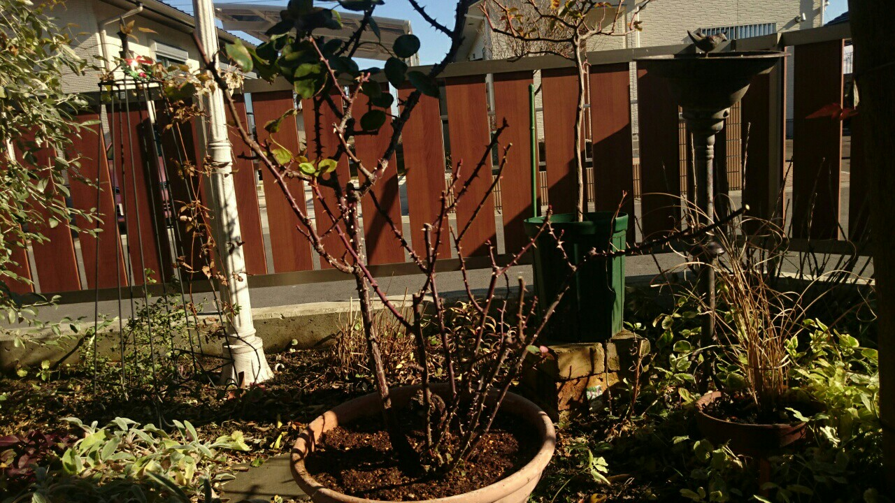 f:id:y-garden:20161218130828j:image