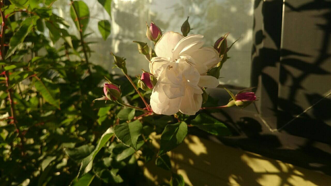 f:id:y-garden:20161228211358j:image
