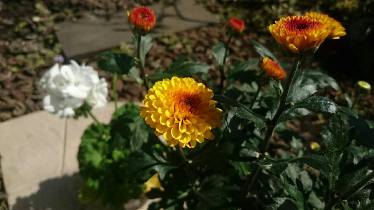 f:id:y-garden:20170423095833j:image