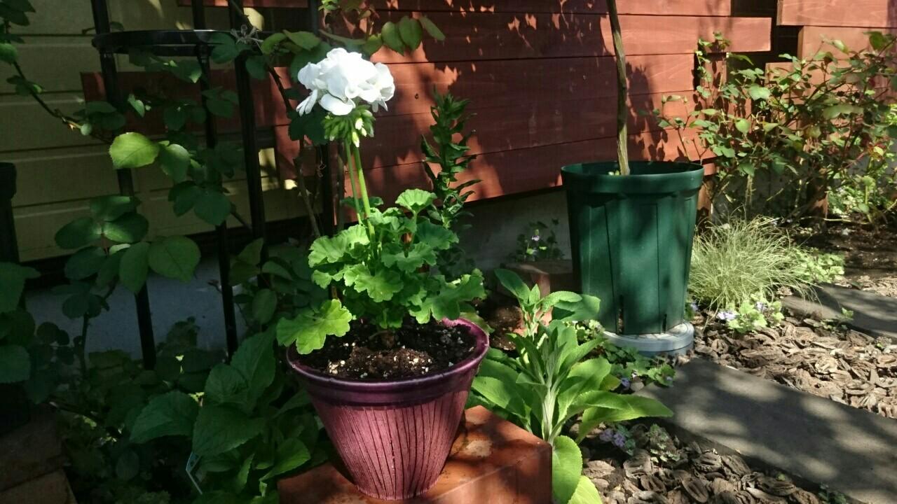 f:id:y-garden:20170423194723j:image