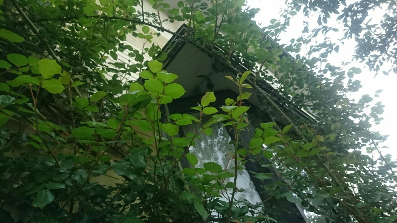 f:id:y-garden:20170507223359j:image