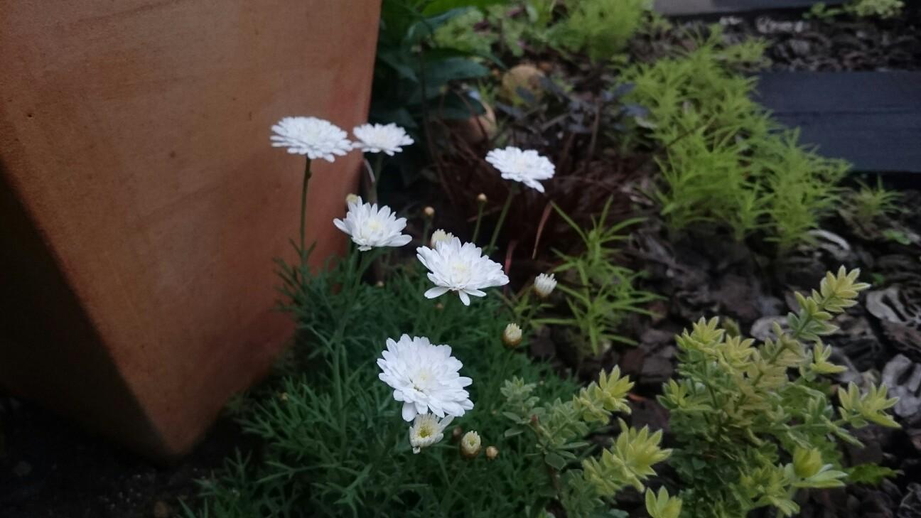 f:id:y-garden:20170511220855j:image
