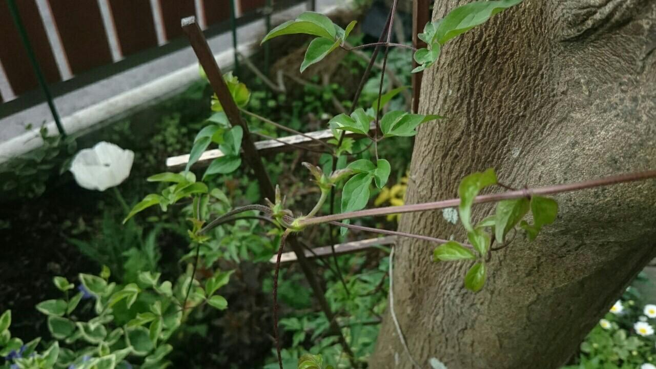 f:id:y-garden:20170511221209j:image