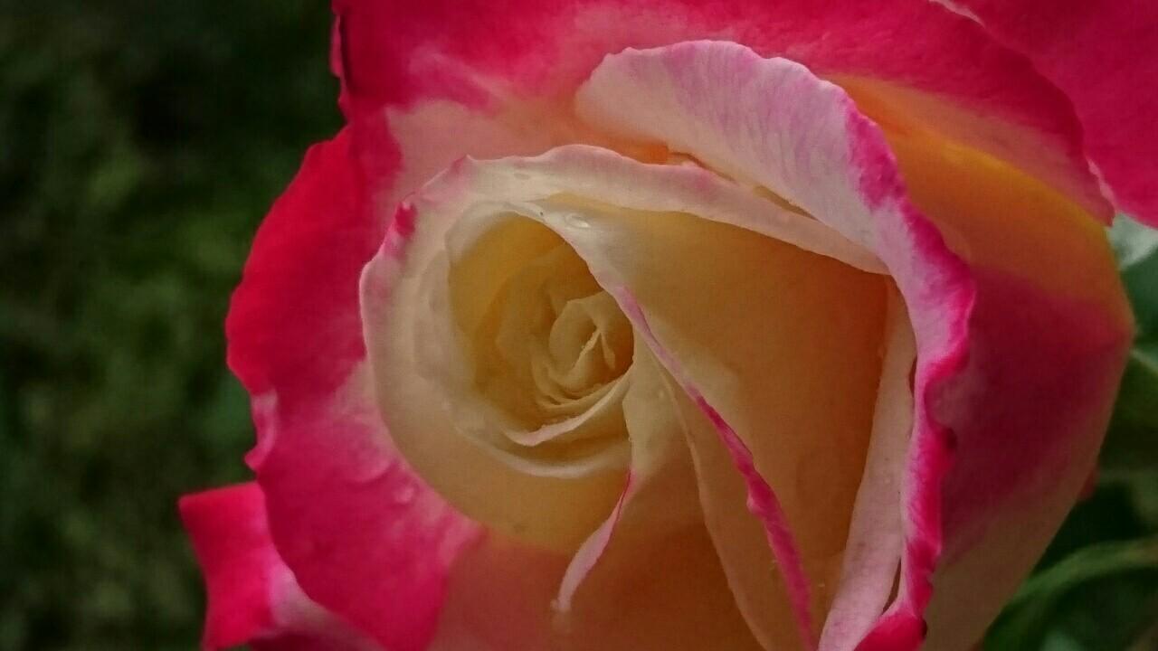 f:id:y-garden:20170514180232j:image