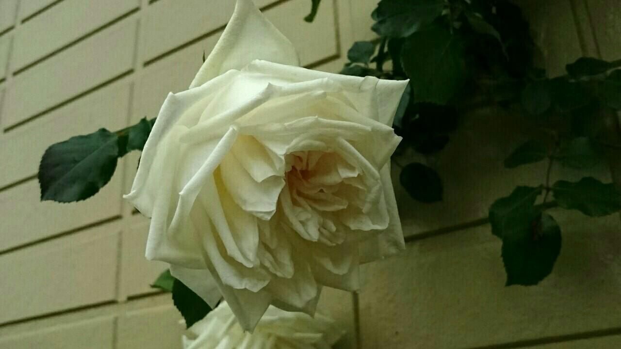 f:id:y-garden:20170514222035j:image