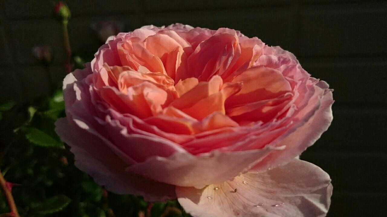 f:id:y-garden:20170516203501j:image