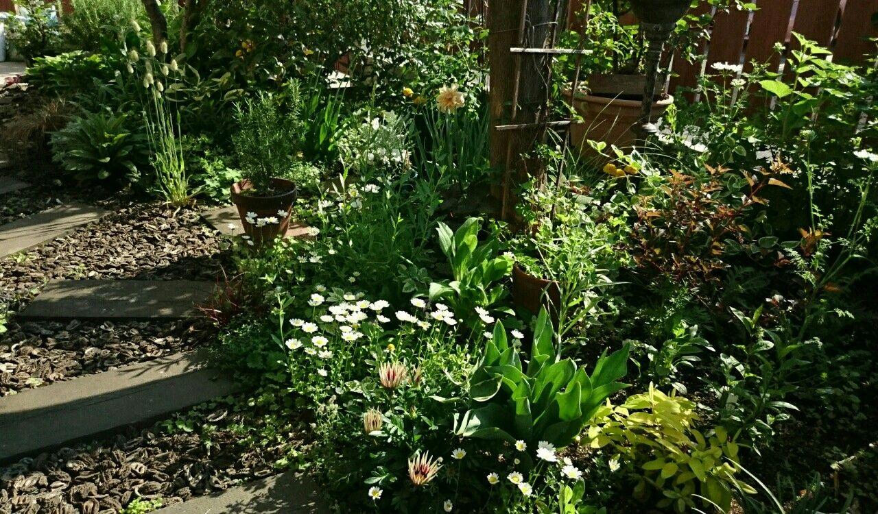 f:id:y-garden:20170520213121j:image
