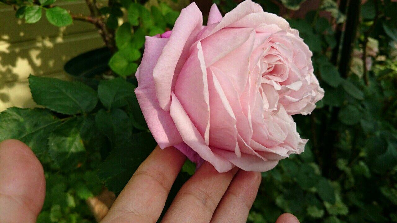 f:id:y-garden:20170522100552j:image