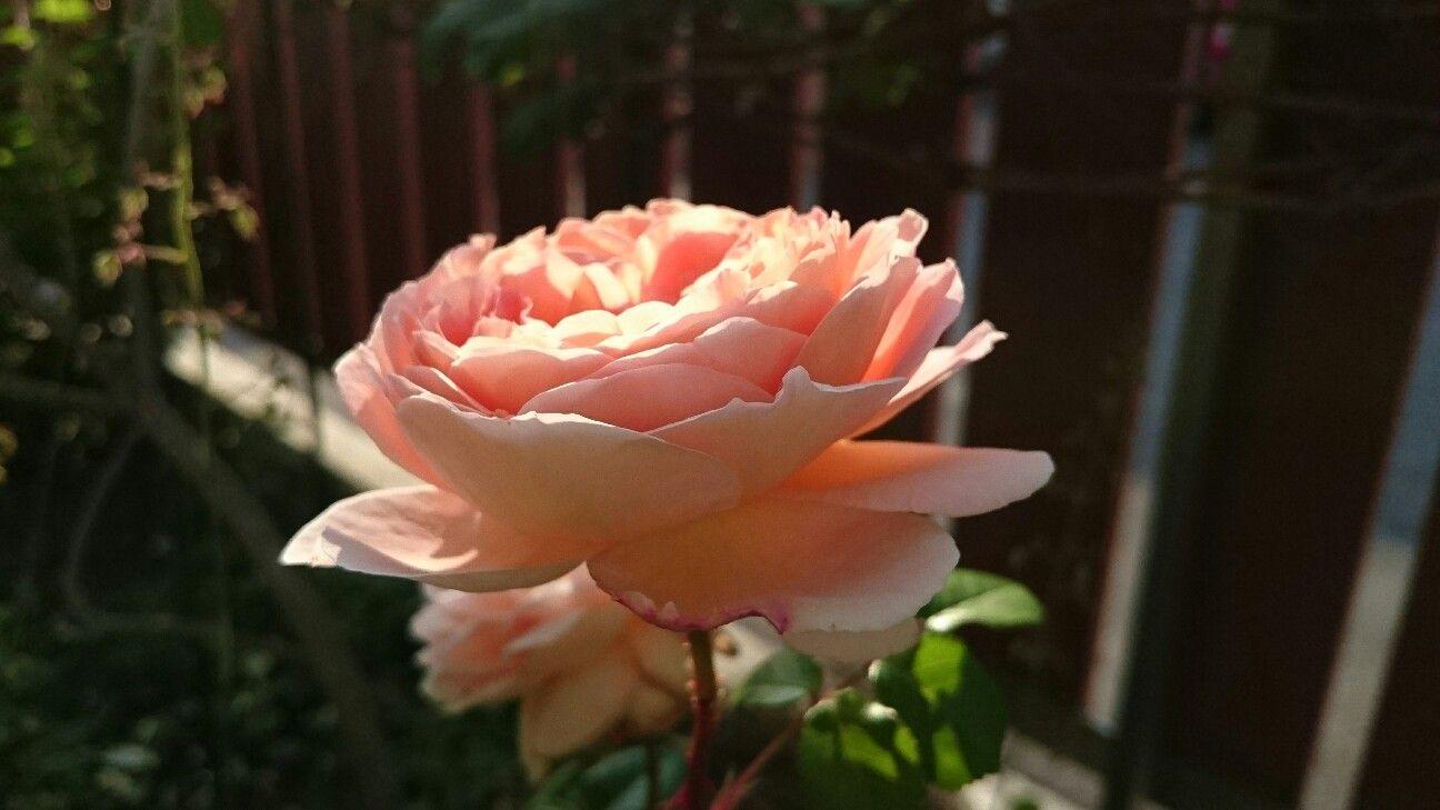 f:id:y-garden:20170524225617j:image