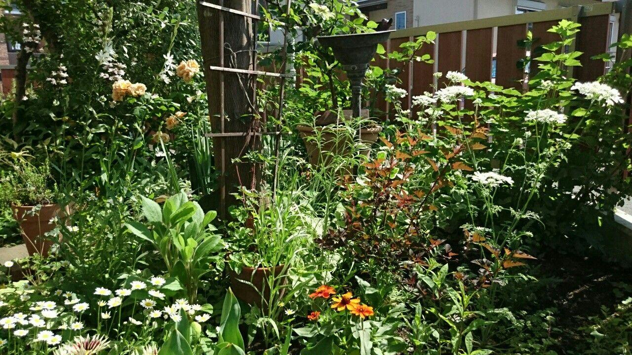 f:id:y-garden:20170529090407j:image