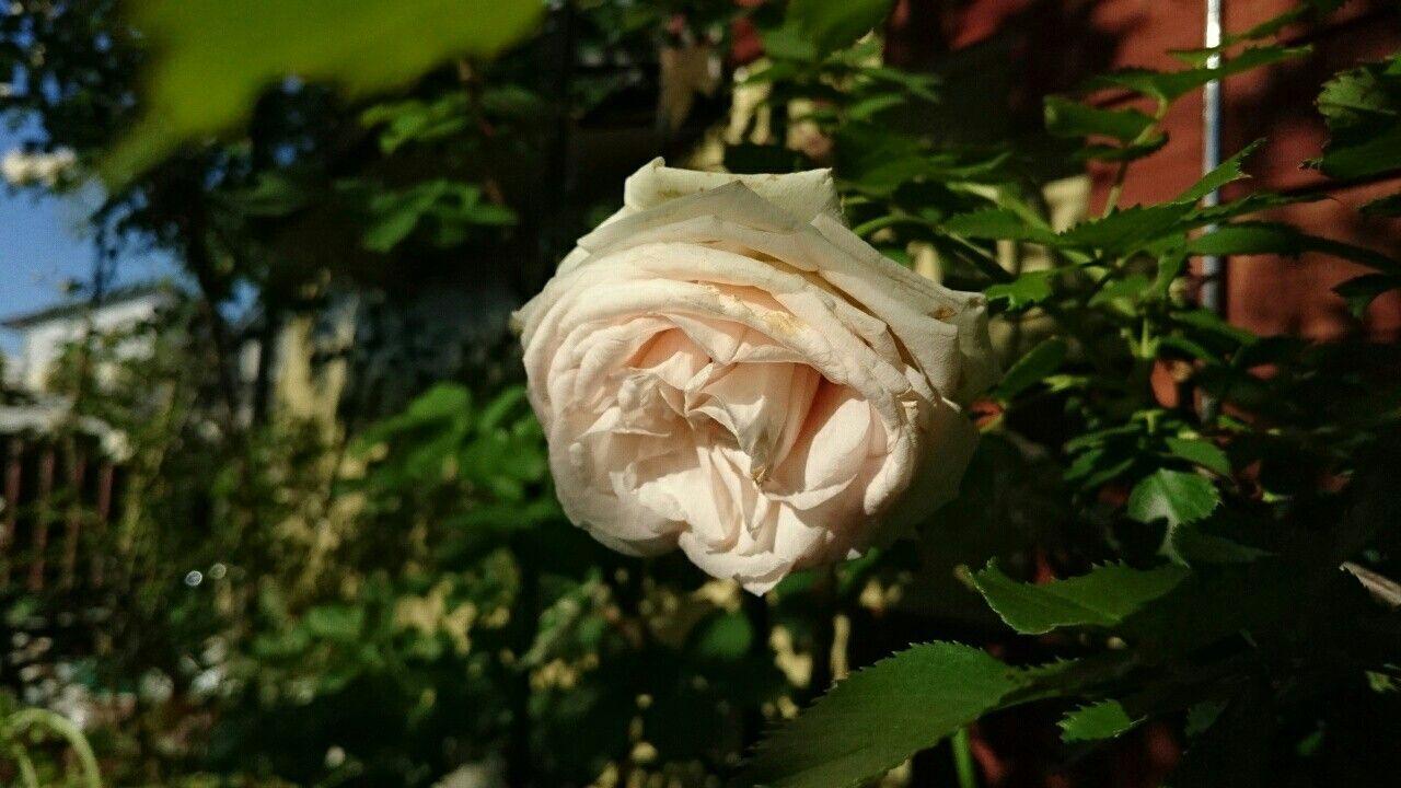 f:id:y-garden:20170603071523j:image