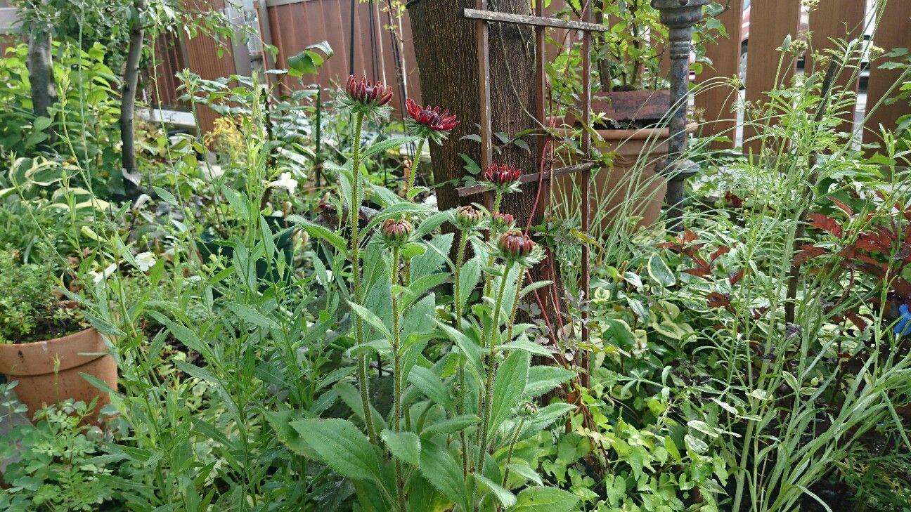 f:id:y-garden:20170622071517j:image