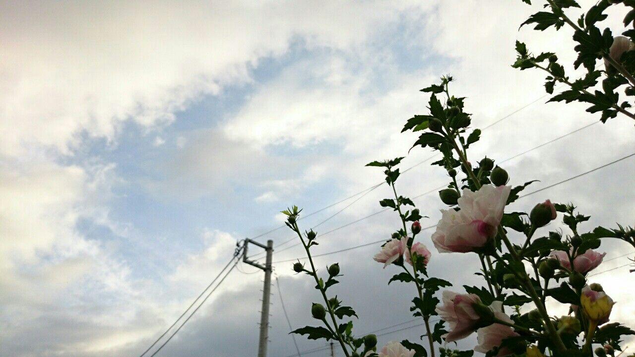 f:id:y-garden:20170713060218j:image