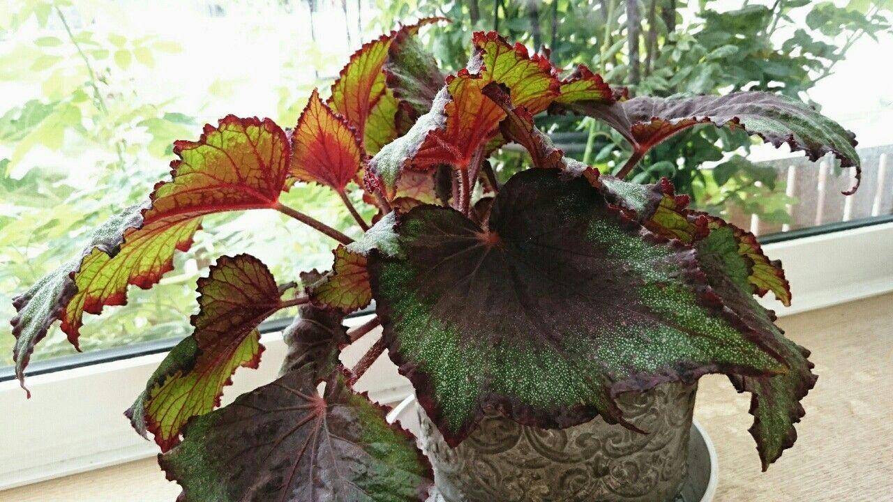 f:id:y-garden:20170714060119j:image