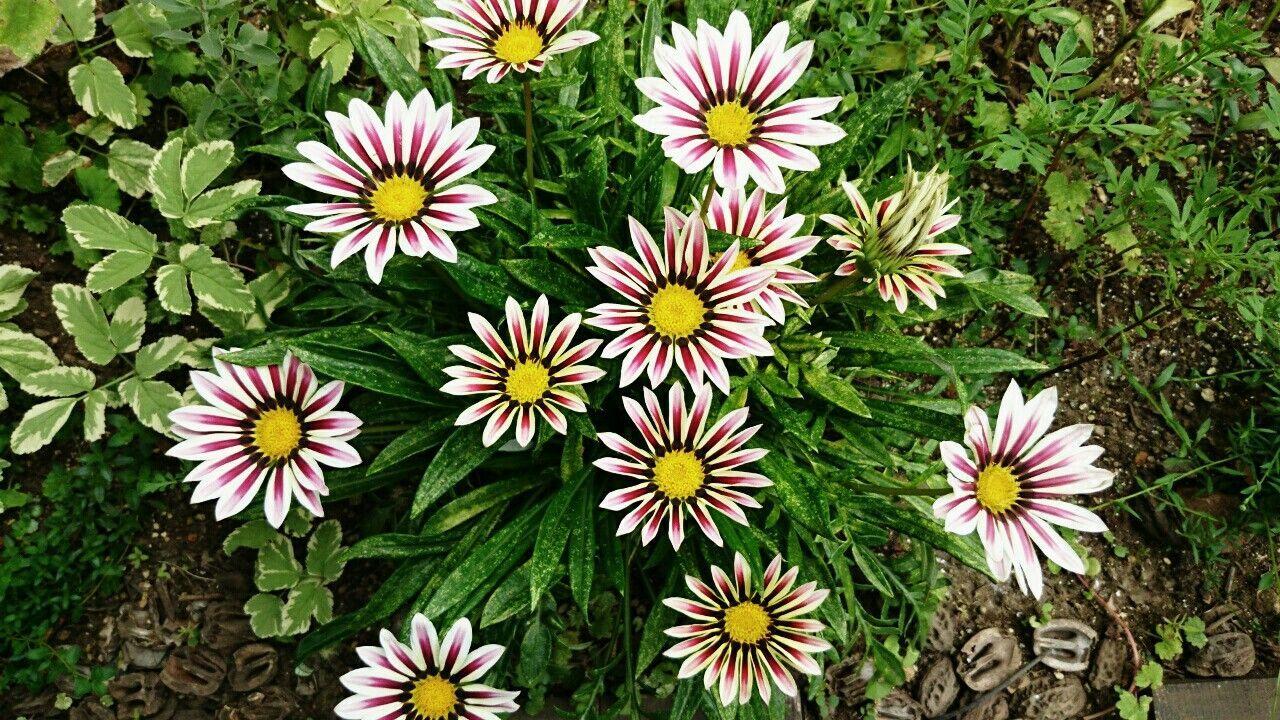 f:id:y-garden:20170716075255j:image