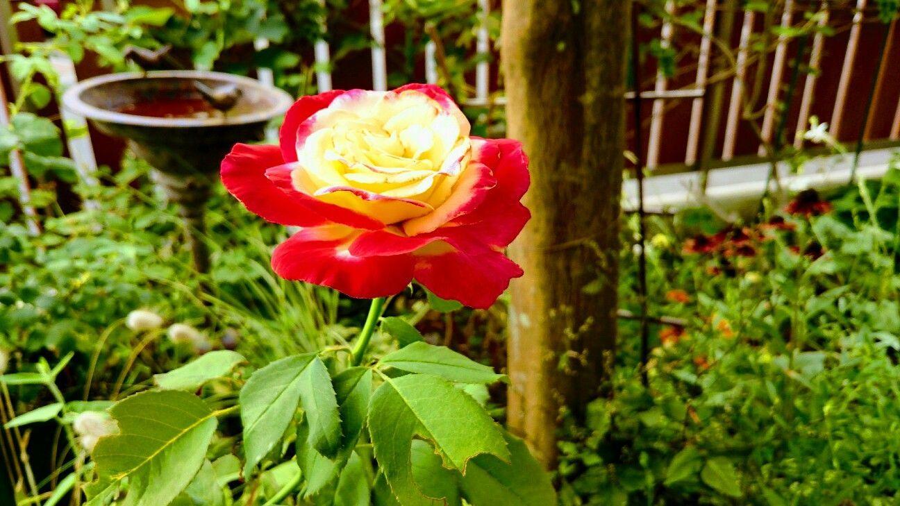 f:id:y-garden:20170719233738j:image