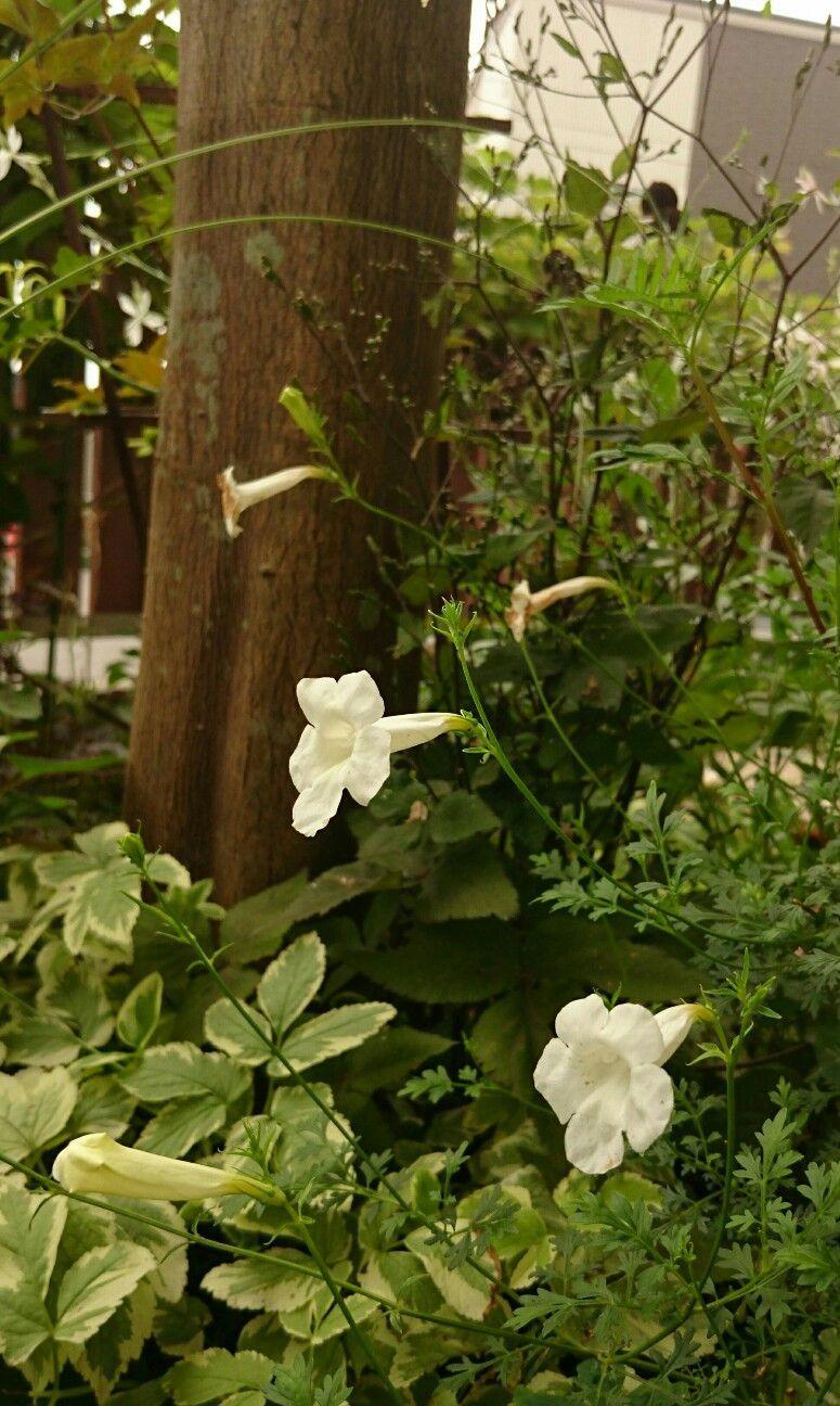 f:id:y-garden:20170805210150j:image