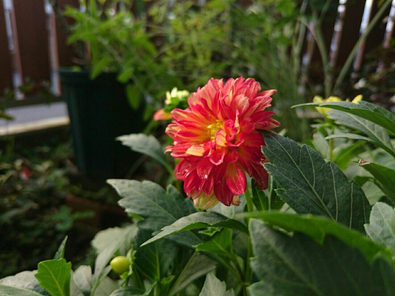 f:id:y-garden:20170831071102j:image